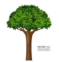 tree vector images over 360 000 rh vectorstock com tree vector silhouette tree vector png