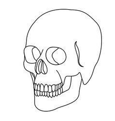 silhouette skeleton of the human skull icon vector image vector image
