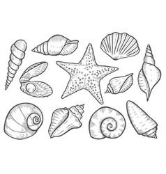 hand drawn seashell vector image