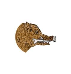 Wild Boar Razorback Bone In Mouth Drawing vector image vector image