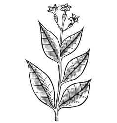 hand drawn wild flower vector image
