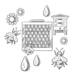Beekeeping and apiary sketched objects vector