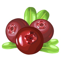 Cowberry vector