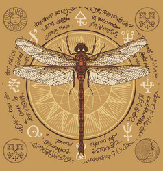 Hand drawn dragonfly with old magic symbols vector