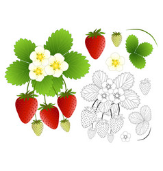 Strawberry flower and outline isolated on white vector