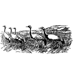 bird demoiselle crane vector image vector image