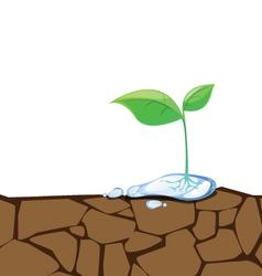Crack Dirt Plant vector image