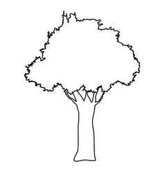 tree natural forest banch foliage image vector image