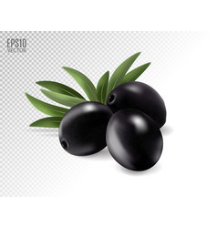 Black olives with leaves photo-realistic vector