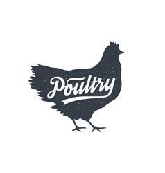 chicken hen poultry lettering vintage vector image