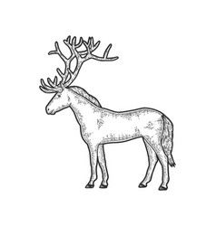 Horse with large deer sketch scratch board vector