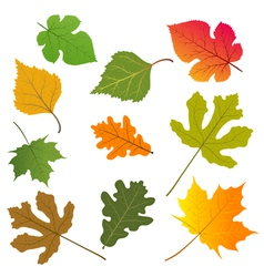 Leaves trees vector