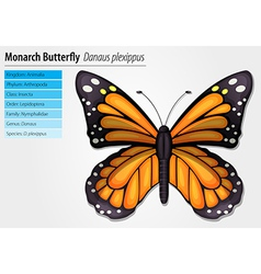 Monarch butterfly vector image