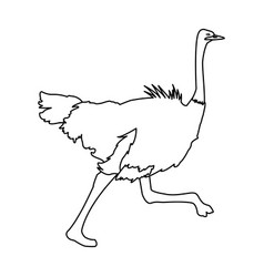 Ostrich birds of savannah african fauna wildlife vector
