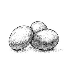 Three eggs vintage engraving black ink isolated vector