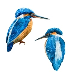 Watercolor blue kingfisher bird vector