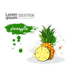 Pineapple hand drawn watercolor fruit on white vector