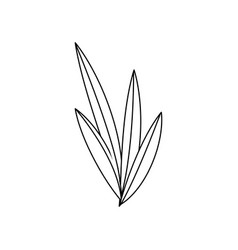 natural leaves foliage flora outline vector image vector image