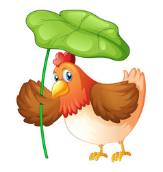 Chicken holding green leaf on white background vector