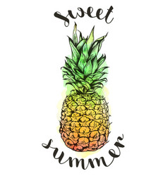 hand drawn watercolor pineapple vector image