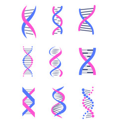 set dna thread like chains colorful banner vector image