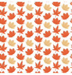 autumn maple leaves white background image vector image
