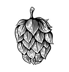 Beer hop in engraving style design element vector