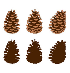 group of different pine cones vector image