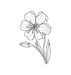 Marigold Flower Monochrome Drawing For Coloring vector