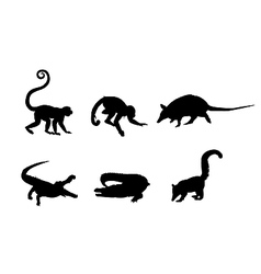 Picture a wild animals vector
