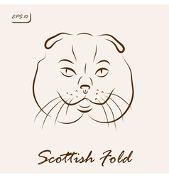 Scottish Fold vector image