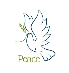 Dove or pigeon with olive branch vector image