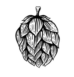 beer hop in engraving style isolated on white vector image