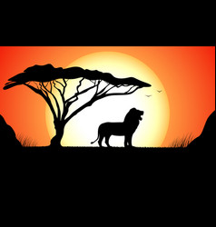 African nature with wild lion vector