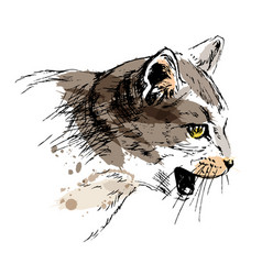 Colored hand sketch cat head vector