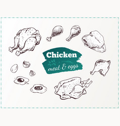 hand drawn food poster chicken parts and eggs vector image