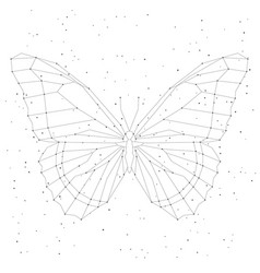 geometric linear butterfly constellation vector image vector image