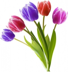 bunch of tulips vector image vector image