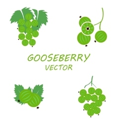 Flat gooseberry icons set vector