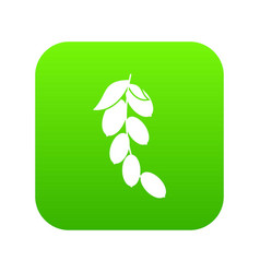 Branch of cornel or dogwood berries icon digital vector