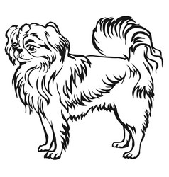 Decorative standing portrait of japanese chin vector