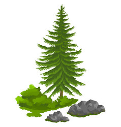 green spruce tree in flat design evergreen vector image