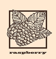 hand drawn raspberries vector image