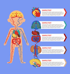 Health poster with human body anatomy vector