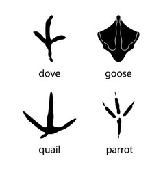 various traces of poultry goose dove parrot vector image