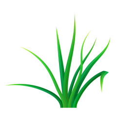 small bunch grass icon realistic style vector image