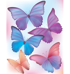 Beautiful blue butterfly vector image vector image