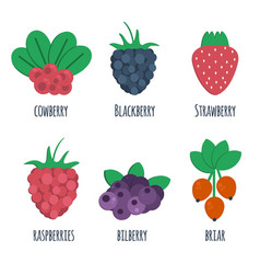 berris vector image vector image