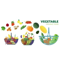 Vegetable on the basket vector image