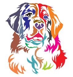 colorful decorative portrait of bernese mountain vector image